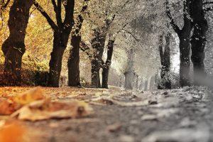 herfstdepressie, fysio Sluijters, herfst